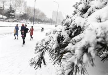 吉林長春:春分時節雪紛紛