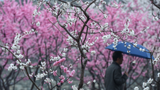 北京:春雪或伴春雨至