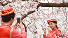 甘肅東鄉萬畝杏花綻放 引遊人駐足享春日美景