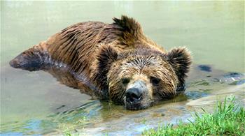 江蘇蘇州:動物享清涼