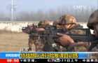 陸軍:特戰部隊進行險難課目訓練