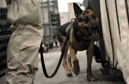 美國軍犬二戰時救人無數 70年後追授最高勳章