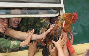 送别子弟兵车站上饱受折磨的鸡