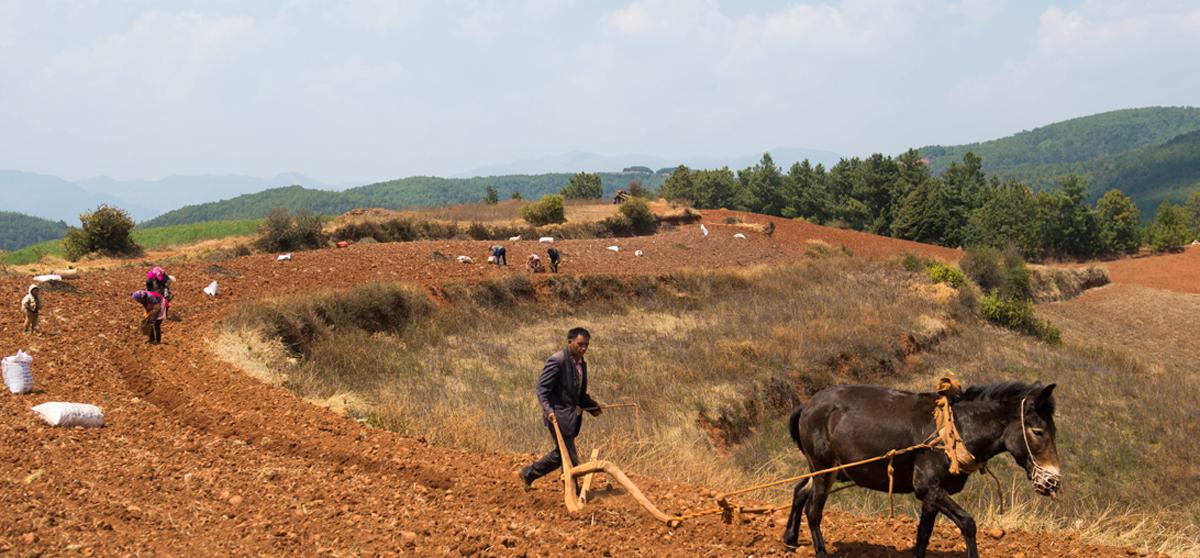 農業銀行部署全面做好鄉村振興金融服務工作