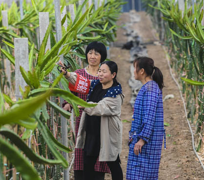 中國首屆鄉村振興大會6月召開
