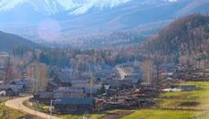 """新疆白哈巴村鋪""""綠毯""""展清新脫俗之美"""