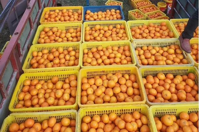 一百噸扶貧蔬果陸續抵達武漢