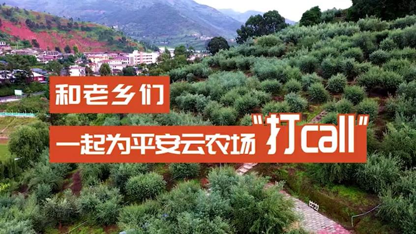 齊聚平安雲農場,認領涼山橄欖樹!