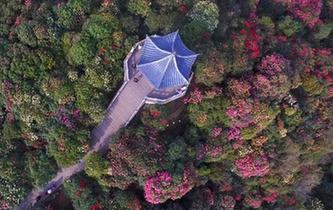 航拍贵州毕节百里杜鹃景区