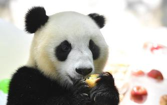 """大熊貓消暑有""""涼""""方"""