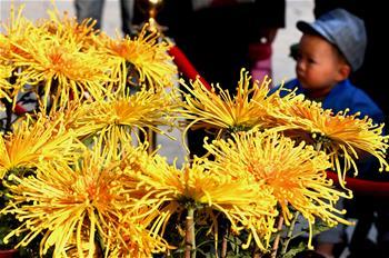古城花宴 重陽菊香