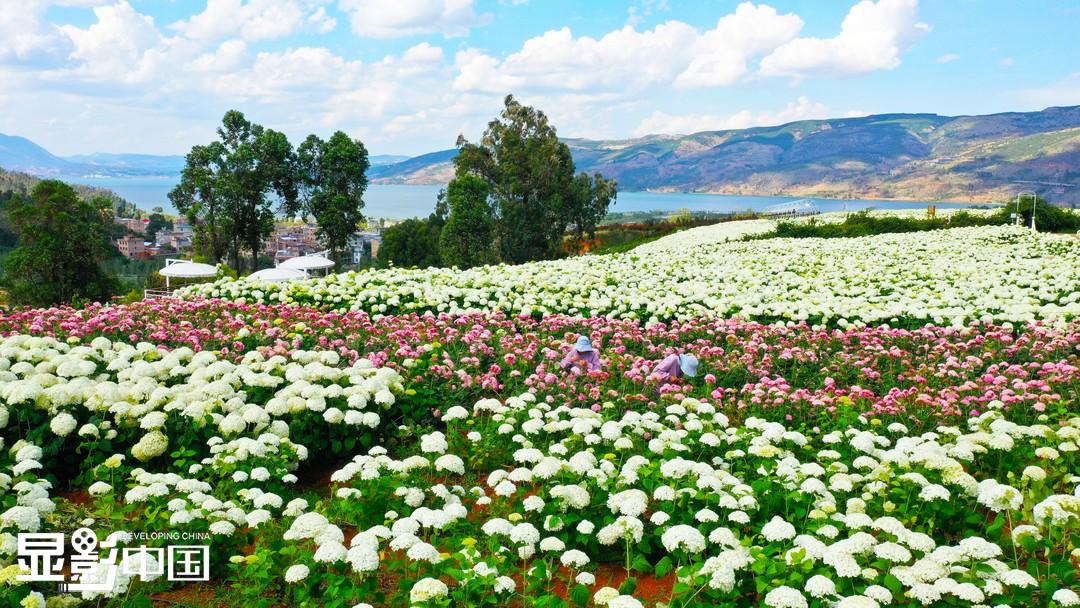 与鲜花有关的乡村振兴路
