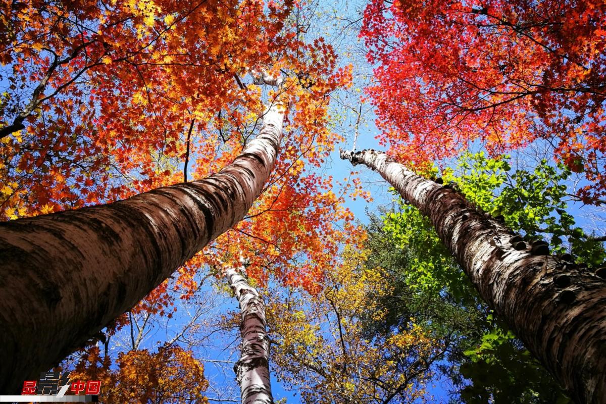 秋天里的童话 红叶迷人