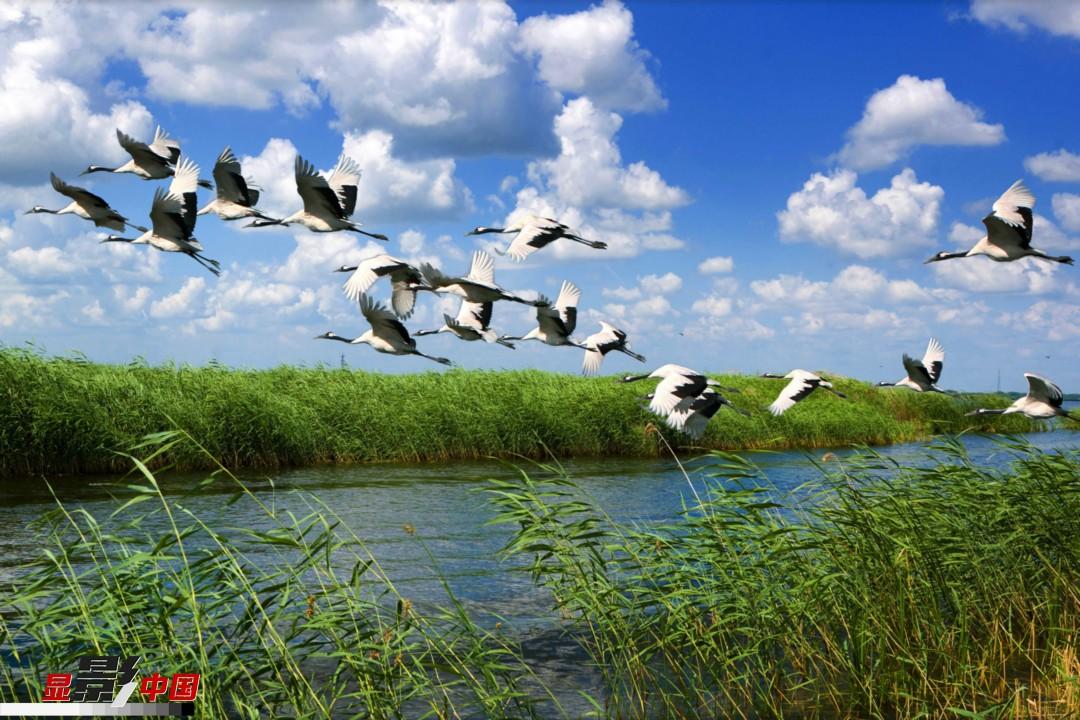 地_这里不仅是丹顶鹤等多种珍稀水禽的繁殖栖息地,而且是中国首个国家级