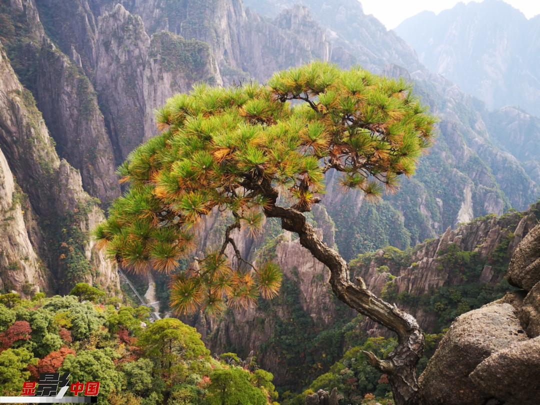 10月13日,天气晴好,黄山风景区五彩斑斓,宛如一幅立体的秋日画卷,美不