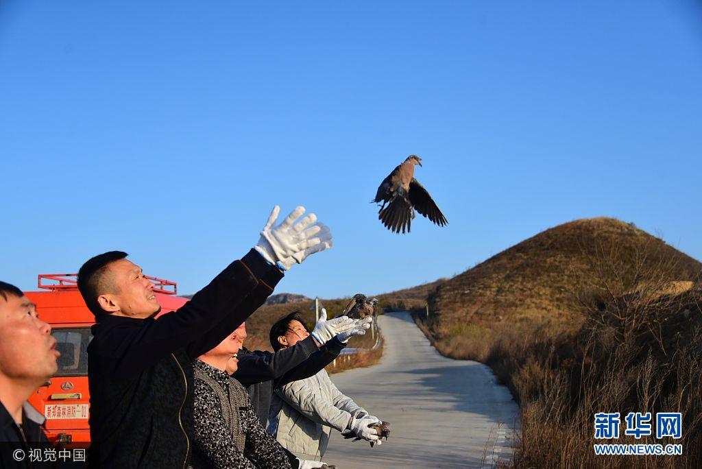 鄭州: 80多只野生動物傷好病愈 被放歸大自然