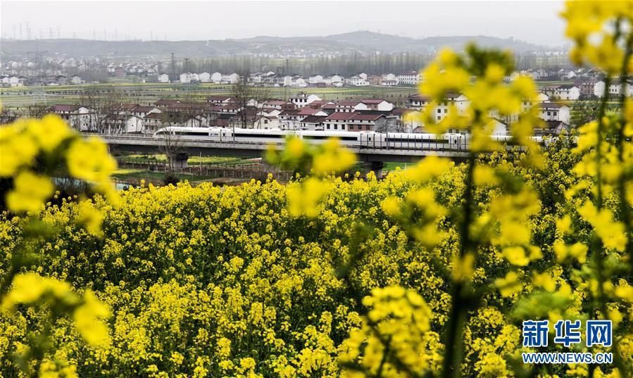 北京赛车平台:驶向花海