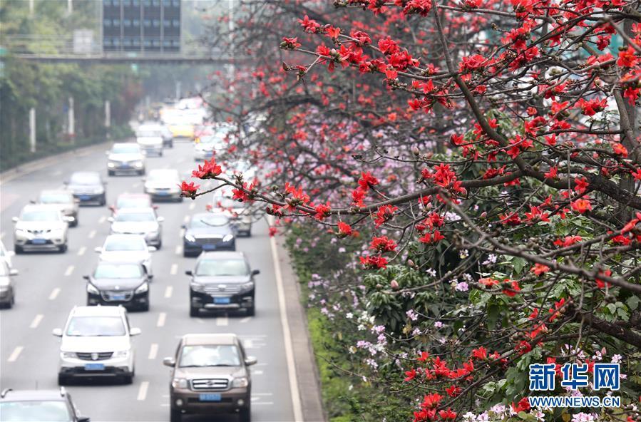 南国三月木棉红_图片频道_新华网