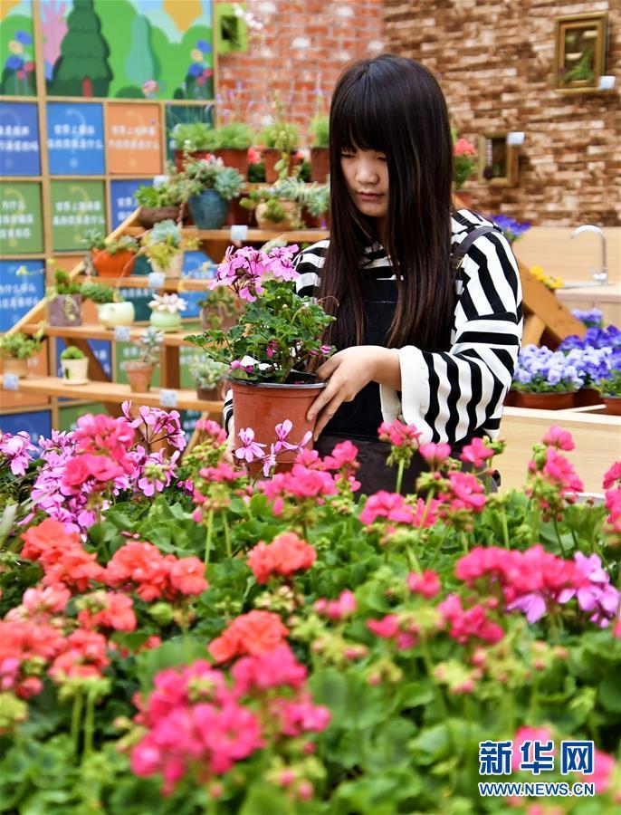 京津冀联合举办第六届北京农业嘉年华