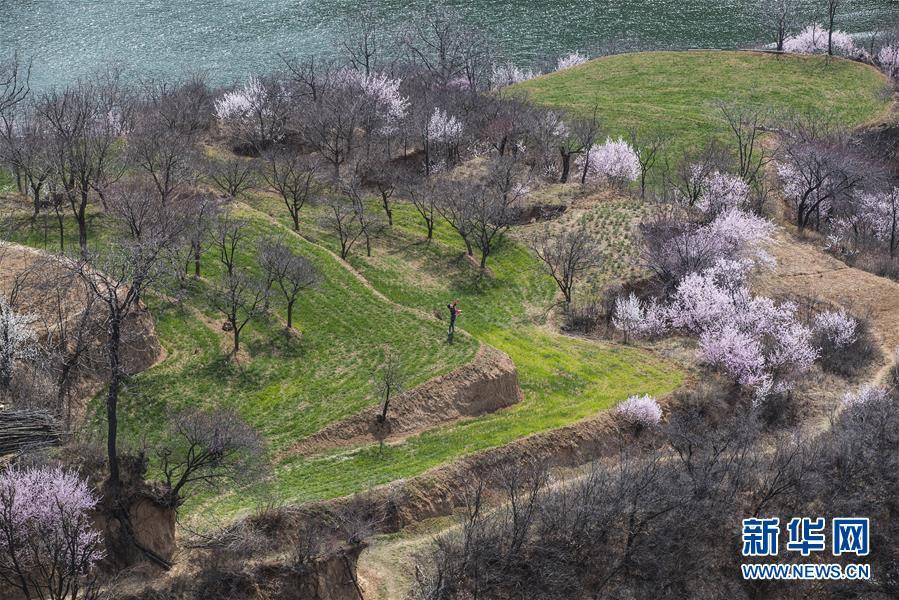 #(环境)(2)春来花盛开