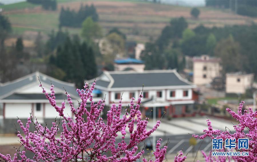 #(環境)(3)春來花盛開