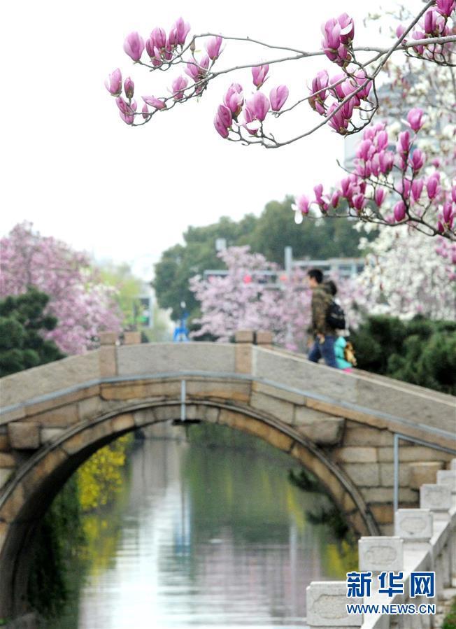 #(环境)(5)春来花盛开