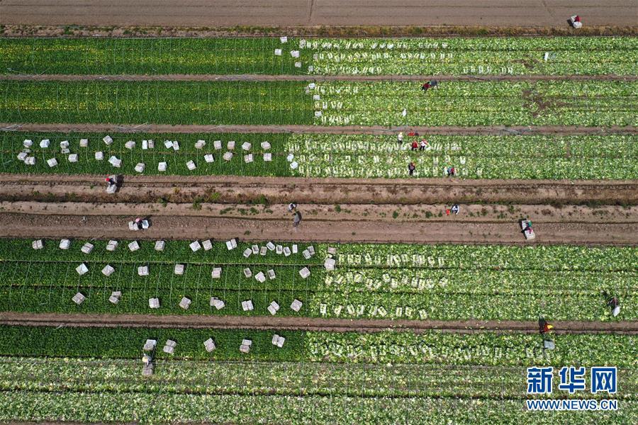 立夏:各地农民抢抓农时 田间地头忙碌起来