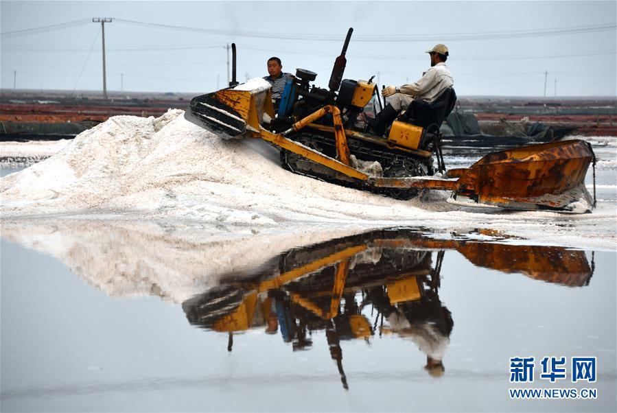 (环境)(8)海盐收获 缤纷如画