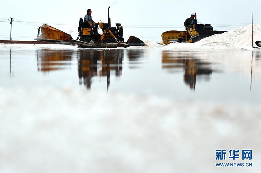 (环境)(9)海盐收获 缤纷如画