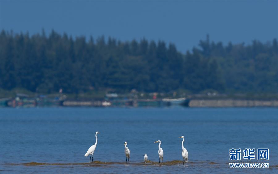 (环境)(1)海南儋州:光村银滩候鸟飞