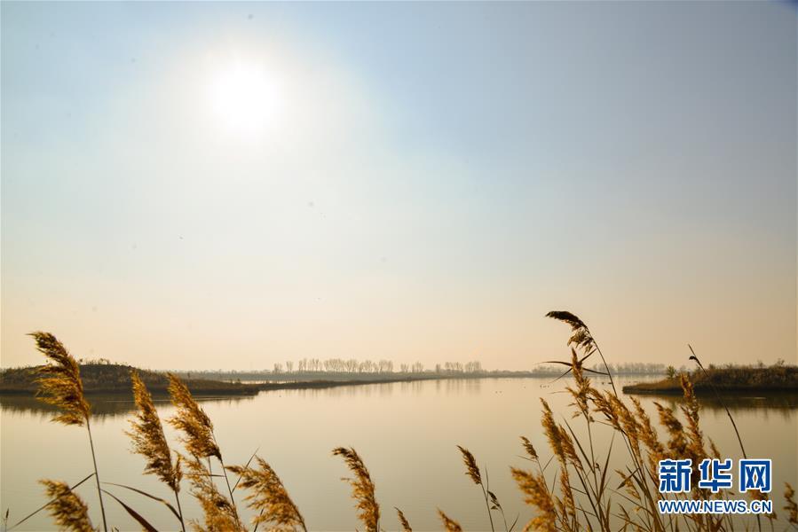 (环境)(1)内蒙古托克托县:黄河两岸秋色美