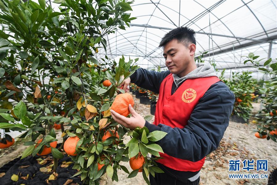 (社会)(1)党员志愿者助农增收