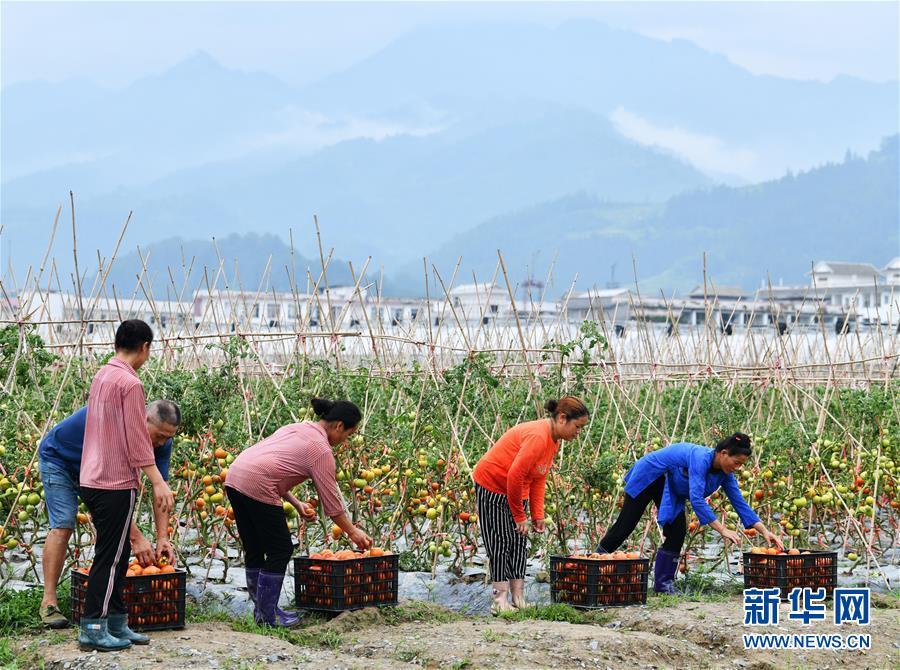 """(脫貧攻堅)(1) 貴州榕江:""""壩區經濟""""助農增收"""
