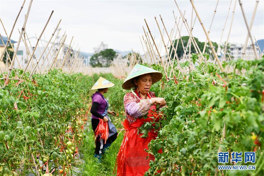 """(脫貧攻堅)(3) 貴州榕江:""""壩區經濟""""助農增收"""