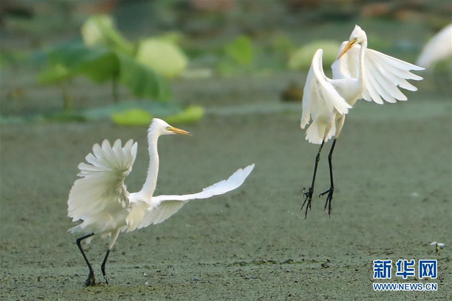 #(環境)(1)鷺舞濕地