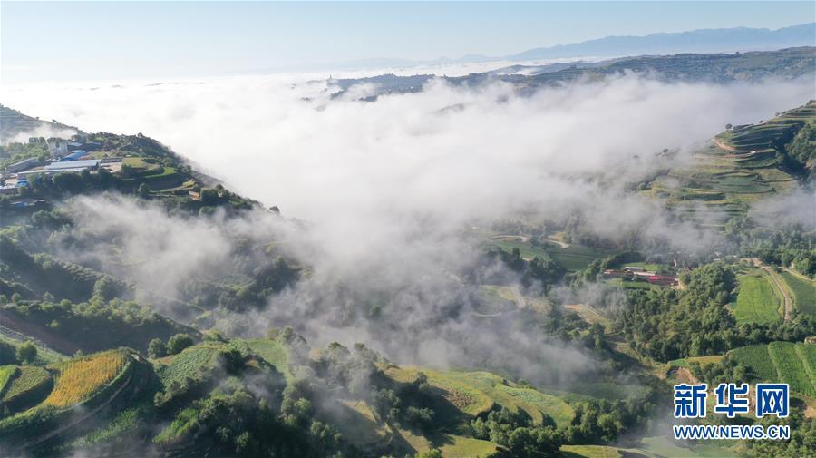 #(環境)(1)甘肅東鄉:梯田雲霧繚繞美如畫