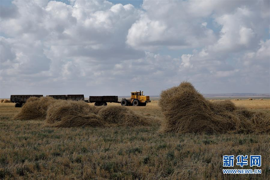 (国际)(1)哈萨克斯坦扩大农产品生产和出口