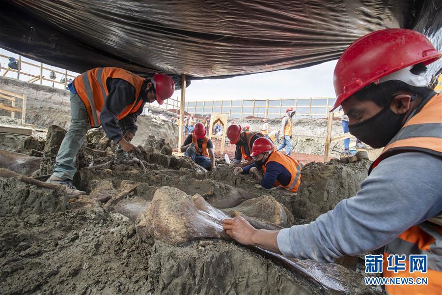 (新华视界)(1)墨西哥新机场工地发现上百具猛犸象遗骨
