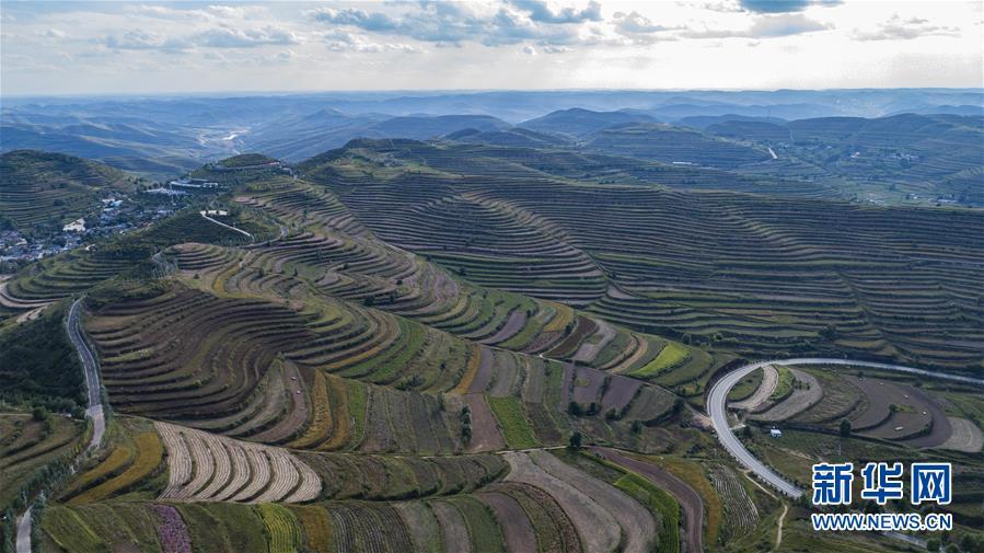 (环境)(1)宁夏西吉:林草产业绘就五彩旱塬