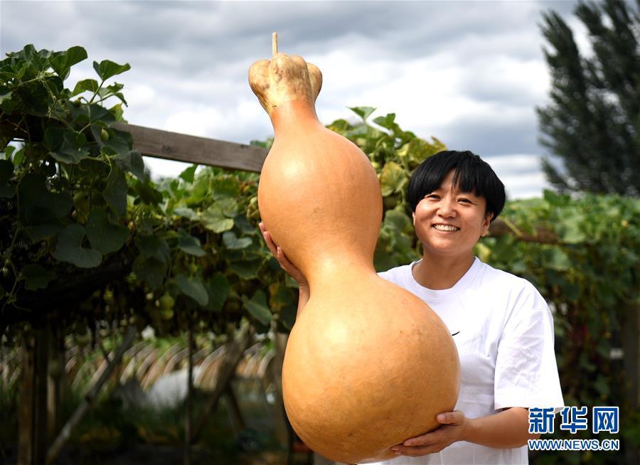 (经济)(1)河北固安:特色种植助农增收