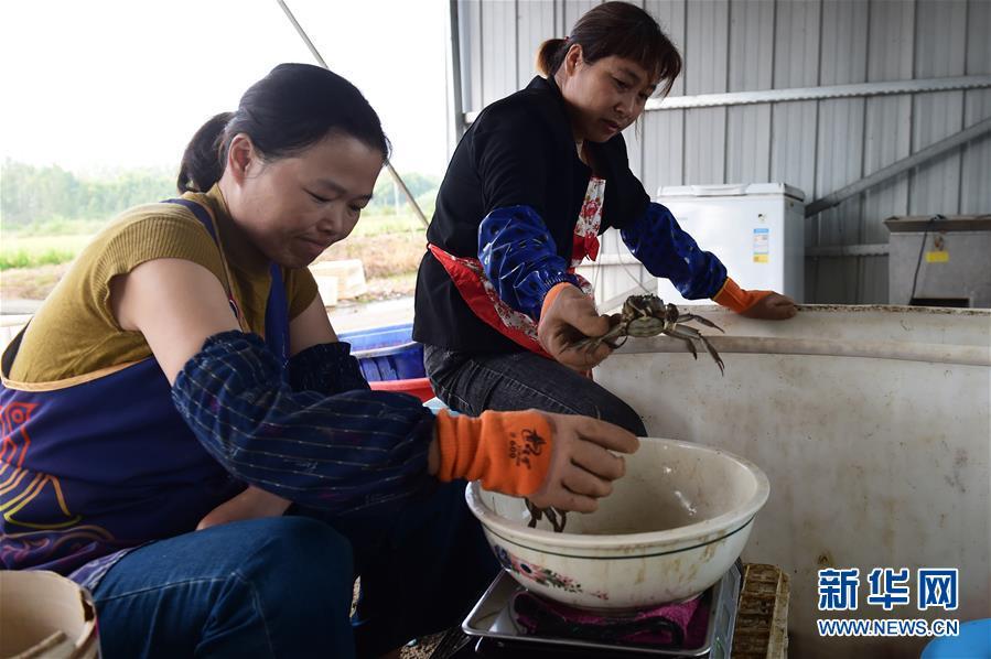 (脱贫攻坚)(4)安徽五河:特色养殖助脱贫
