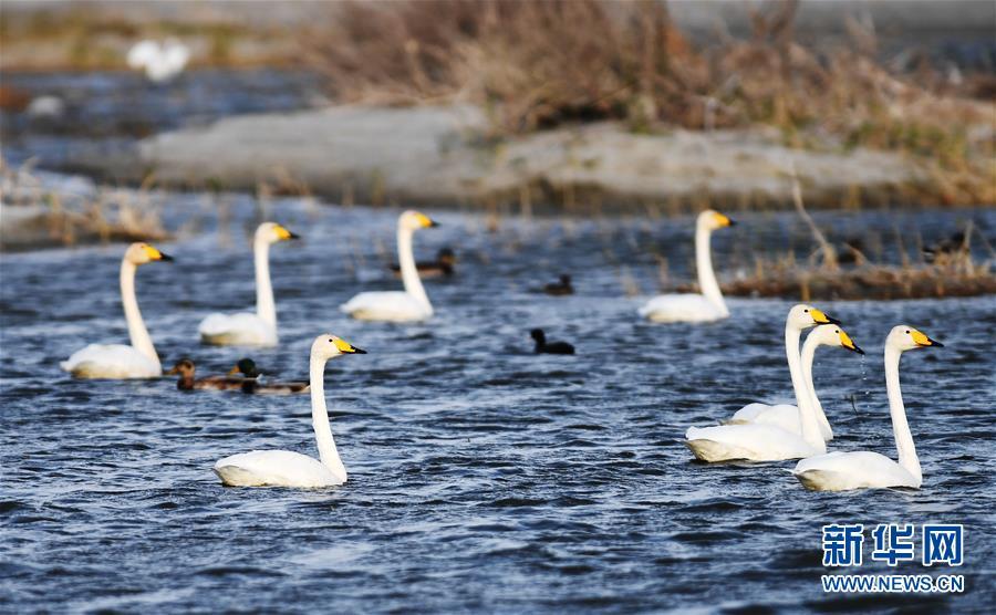 (环境)(1)候鸟天堂乌伦古湖湿地公园