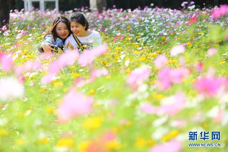 海南三亚:花海引客来