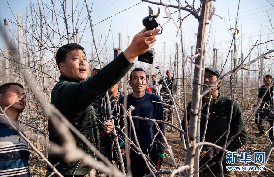 陕西宜川:人勤春早果农忙