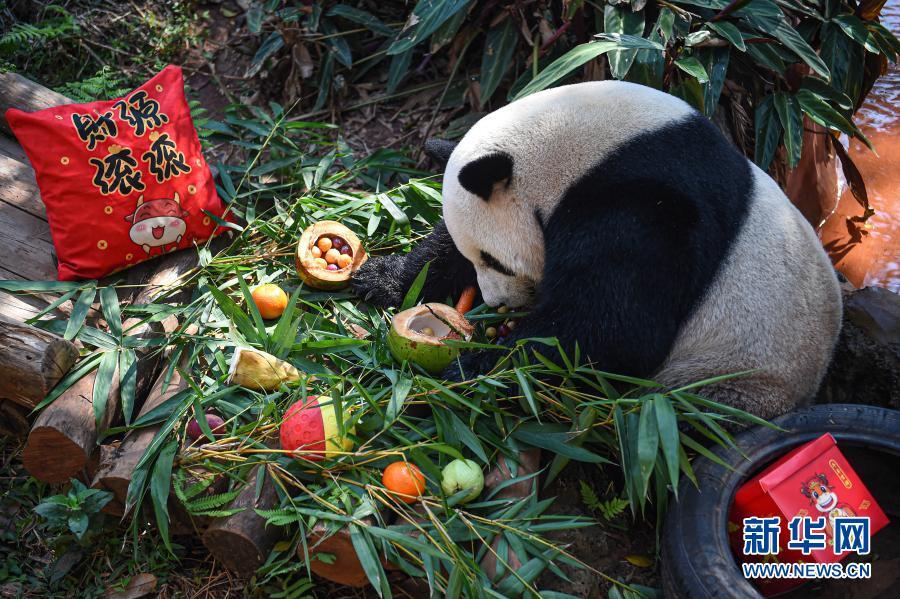 共庆佳节!海口:动物享美食迎元宵节