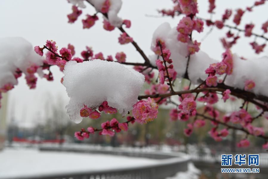 大美!雪润春日
