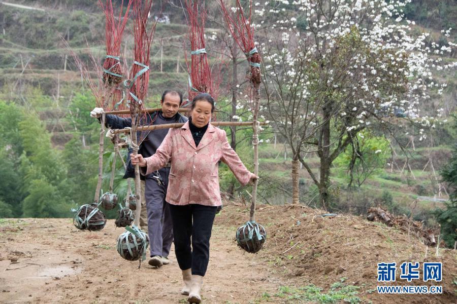 湖南永州:山村植树忙