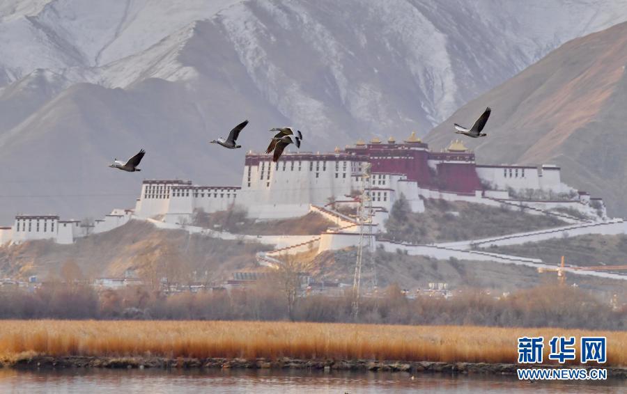 西藏:拉鲁湿地 鸟的乐园