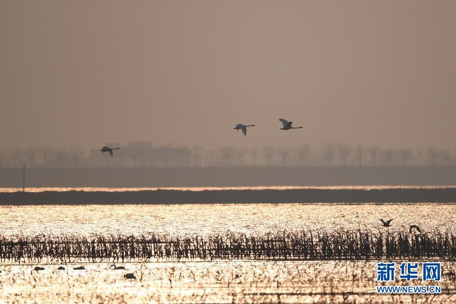 天气转暖 黄河湿地迎候鸟