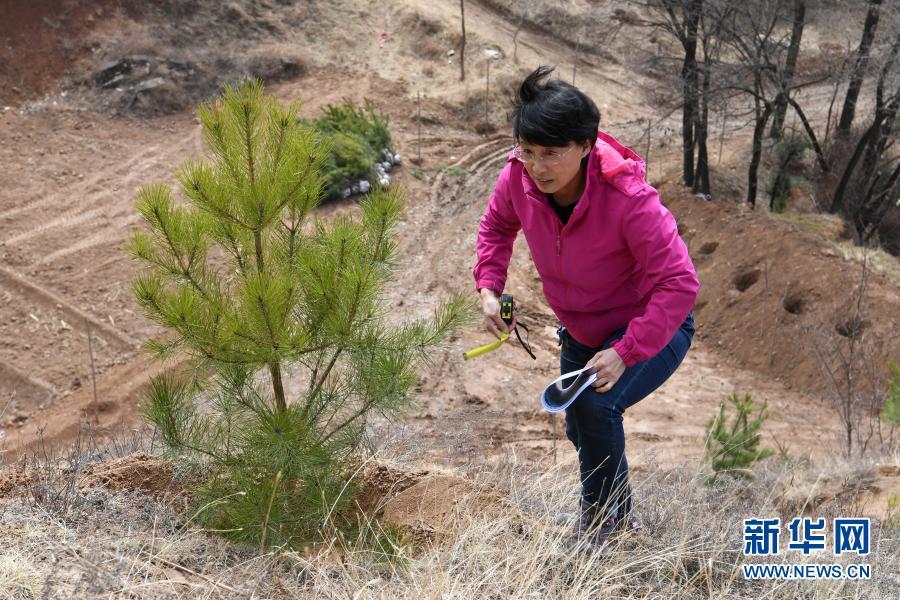 與林木結緣——綠色是她的摯愛